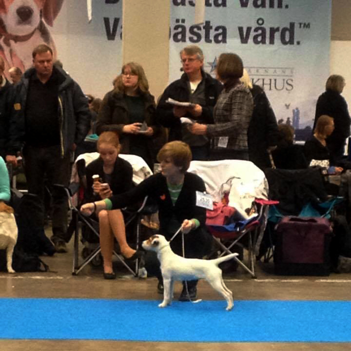 parson russell mei at show